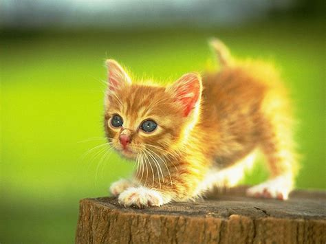 Wallpapers Hunting Cat Wallpapers