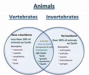 A Venn Diagram Is A Graphic Organizer That Compares