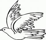 Pigeon Coloring Pages Dove Drawing Principle sketch template