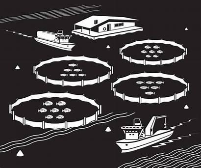 Fish Farm Vector Aquaculture Sea Illustration Illustrations
