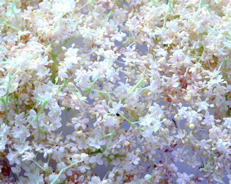 fiori limone latteelavanda torta di fiori di sambuco e limone
