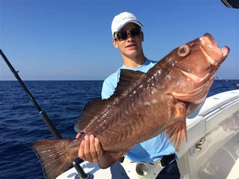 grouper gulf mexico fishing charter florida keys