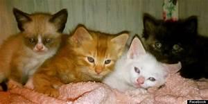 Grumpy Cat Kitten Photos Revealed (PHOTOS) | HuffPost