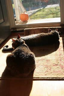 Knit Jones: Sun Soaked Kitties
