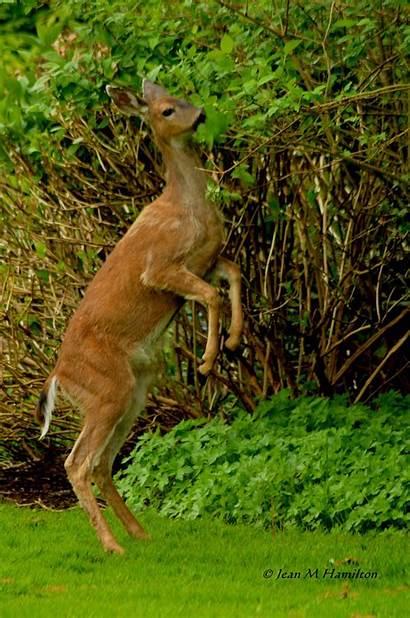 Kangaroo Deer Eyes Lens Jean Through
