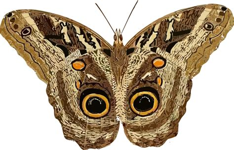 Orange And Black Wallpaper Moth Clip Art At Clker Com Vector Clip Art Online Royalty Free Public Domain