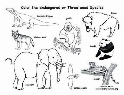 Endangered Animals Drawing Species Pages Coloring Getdrawings