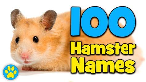 hamster names 100 hamster name ideas youtube