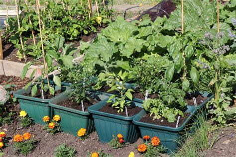 cuisine bio potager en pot jardins de pots