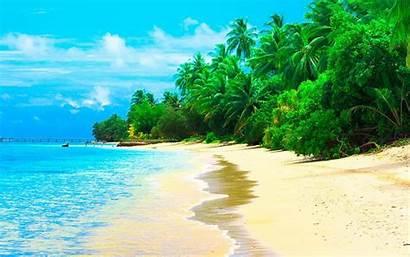 Beach Desktop Summer Coconut Maldives Sandy Trees