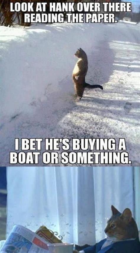 Cat Buy A Boat Meme - image 579495 i should buy a boat cat know your meme