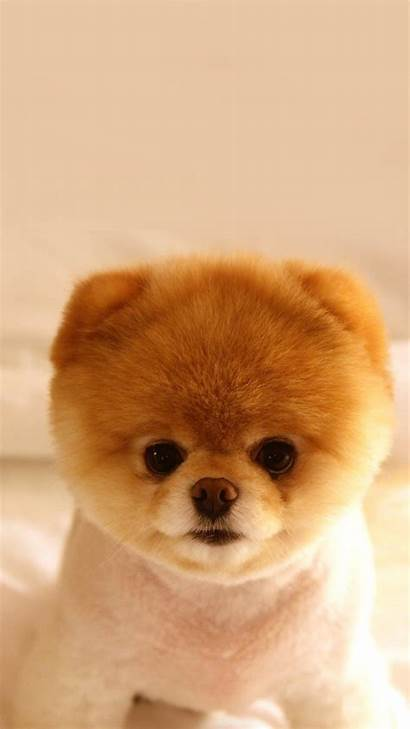 Puppy Dog Cutest Phone Wallpapers Puppies Tablet