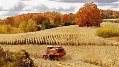 Corn Autumn Harvest Cornfield Cadillac Season Michigan