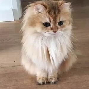 Just the Most Beautiful Cat in the World - 9GAG