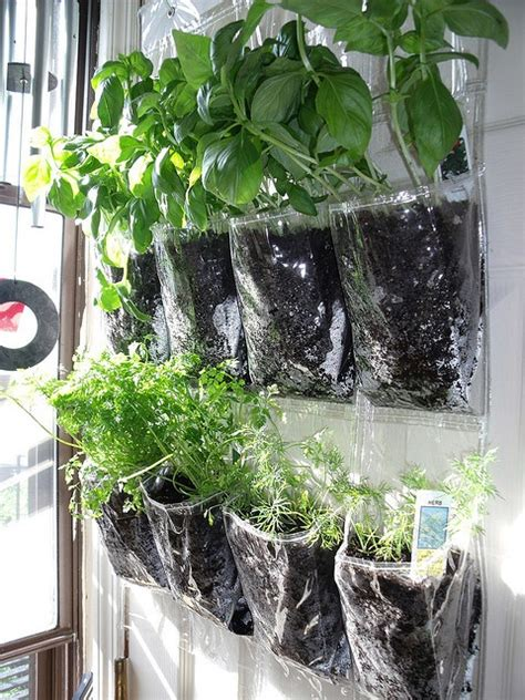 Plants in Hanging Shoe Holder