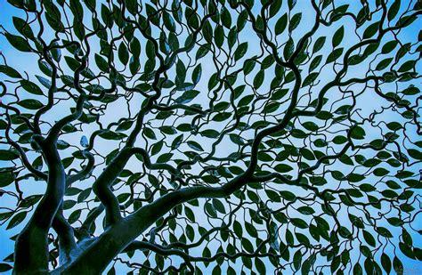 stainless steel tree sculpture arbour metallum tree sculpture mark reed sculpture