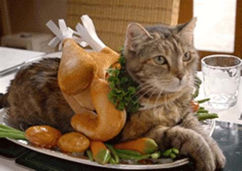Top 10 Tasty Cats That Look Like Foods