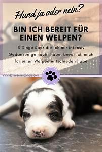 Ich Suche Einen Großen Hund : hund ja oder nein 8 berlegungen vor der anschaffung ~ Jslefanu.com Haus und Dekorationen