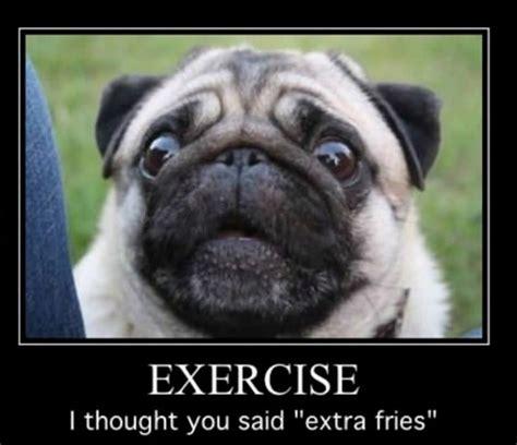 Funny Pug Memes - 551 best images about funny pug dog memes lol on pinterest pug meme lol funny and funny