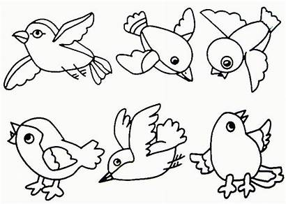 Coloring Pages Robin Spring Bird Adults Popular