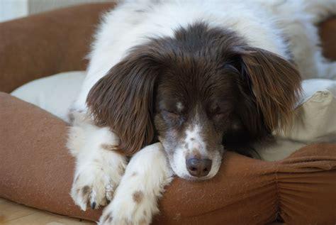 Wie Reinige Ich Mein Hundekörbchen Richtig? » Tierheilkunde
