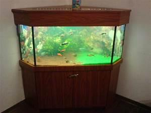 Liter Aquarium Berechnen : wieviel liter hat dieses aquarium ~ Themetempest.com Abrechnung