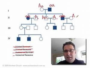Pedigree Analysis 1 How To Solve A Genetic Pedigree No 1