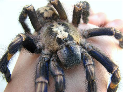 amazing animals pictures  blue colour   legs