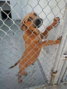 manatee county animal shelter quarantined  dogs