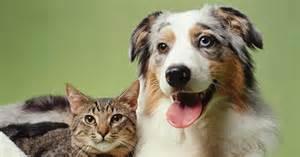 dogs smarter  cats peoria az arrowhead pooper