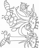 Coloring Insect Pages Insects Bugs Letter sketch template