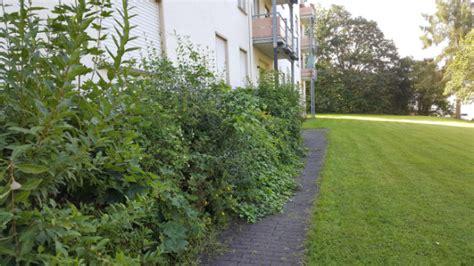 Garten Und Landschaftsbau Gießen  Galabau Gießen