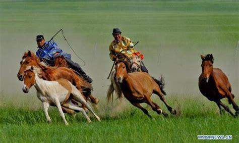 Inner Mongolia's equestrians demonstrate horse lassoing ...