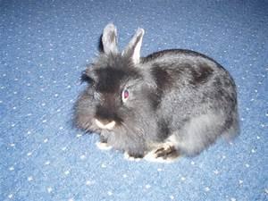 Haus Verschenken An Kind : kaninchen zu verschenken tiere hamburg ~ Lizthompson.info Haus und Dekorationen