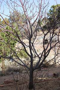 FRUIT TREES « giantveggiegardener