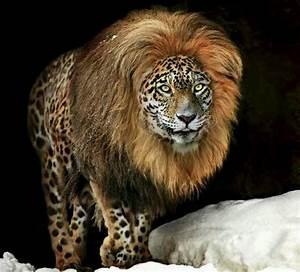 rare animals | Super rare panion. Beautiful. | Animals ...