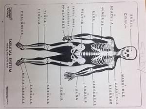 Skeletal System Vocabulary  Vocabulary Skeletal System 2