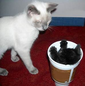 23 Adorable baby animals in cups | Amazing Creatures