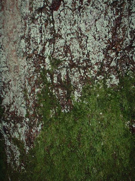 types of moss on trees bryophytes