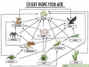 How To Draw A Food Web  With Pictures
