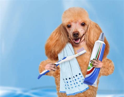 Tips To Keep Your Dogs Teeth Sparkling Clean AngusPost