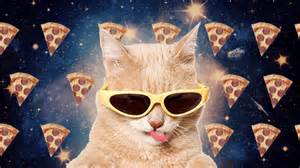 cat pizza pizza cat