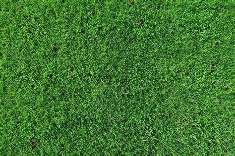 Kostenlose Bild: Blatt, Rasen, Rasen, grün, grün, Muster ...