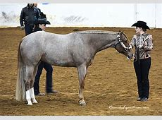 [PHOTOS] Showmanship from the AQHA Spring Breakout