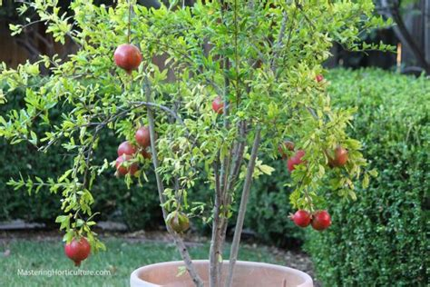 15 Container Gardening Fruit With Incredible Flavor Easy