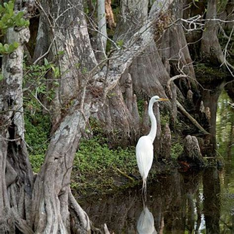 Everglades Airboat Tours Near Sarasota by Best 25 Florida Everglades Ideas On
