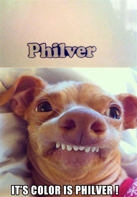 Funny Dog Face Meme - philver
