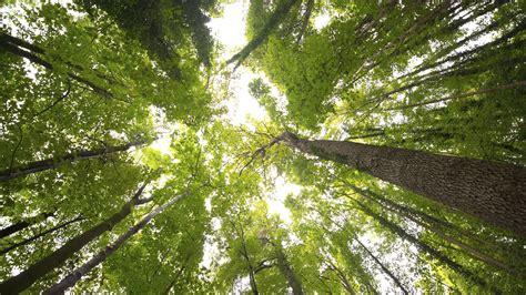 canap tress tree canopy related keywords tree canopy