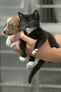 A Rejected Puppy And An Abandoned Kitten Adopt Each Other