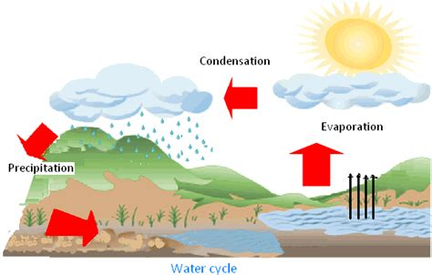 Diagram Of A Water by Forms Of Water Explanation On Water Cycle Along With The
